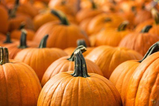 5 Libri Illustrati da sfogliare prima e dopo Halloween