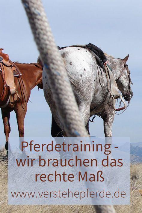 Gutes Pferdetraining braucht Einfühlungsvermögen, Beobachtungsgabe und - das rechte Maß; Horsemanship, Reiten, Bodenarbeit