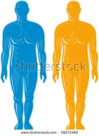vector illustration of a Male human anatomy standing front  #humanbody #silhouette #illustration