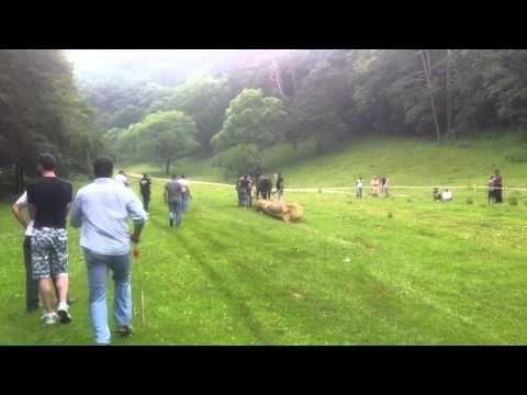 caii lui miki de la moieciu - YouTube