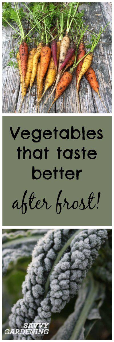 Vegetables that taste better AFTER frost! (Savvy Gardening)