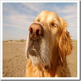 Cuidados caninos na terceira idade. Como cuidar de Cães idosos