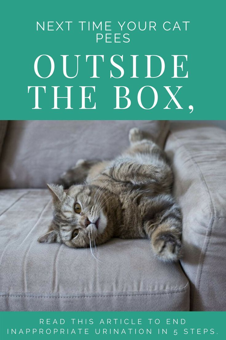 How To Stop Your Cat From Peeing Outside The Litter Box Stop Cats From Peeing Cat Pee Smell Cat Peeing In House