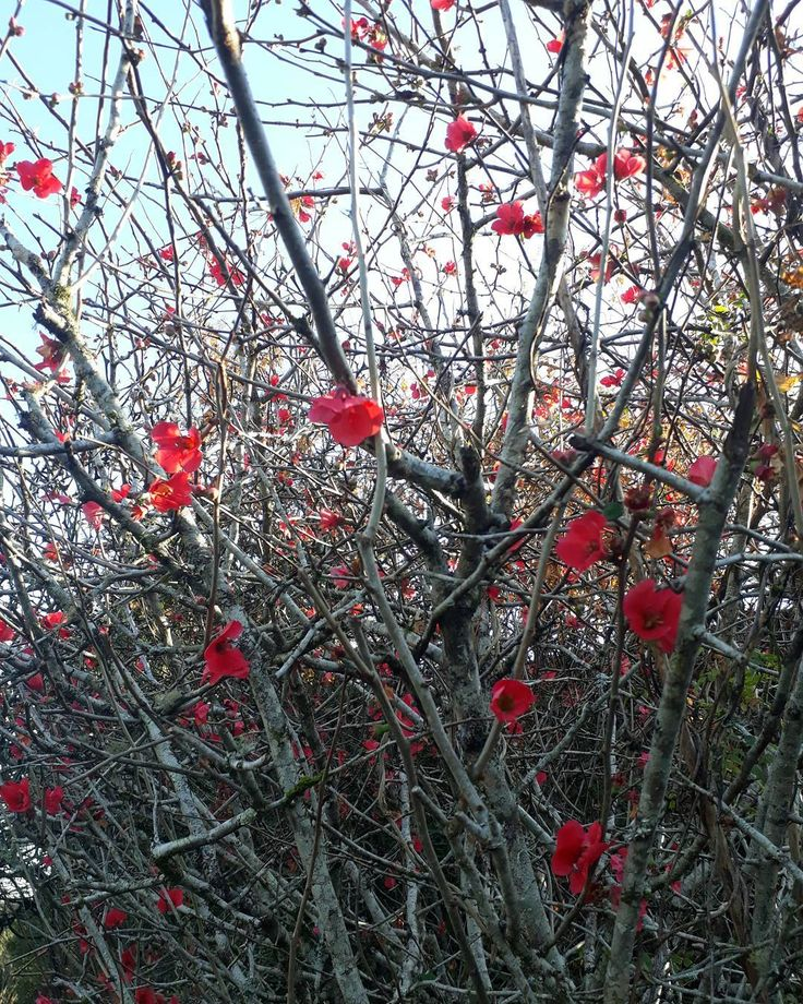"""37 curtidas, 1 comentários - Um Pontinho (@umpontinhobordados) no Instagram: """"Parece impossível, mas é natural: uma planta toda seca cheia de flores vibrantes. Natureza {sua…"""""""