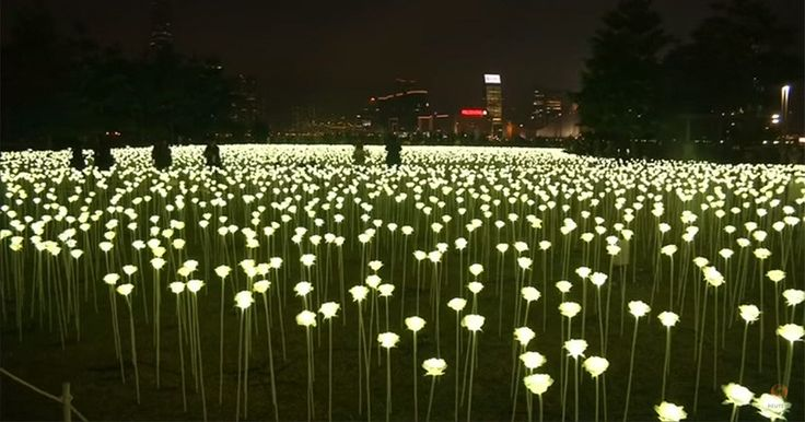 A field of illuminated roses has arrived in Hong Kong for Valentine