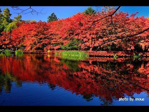 紅葉に染まる軽井沢の雲場池2014・4K撮影