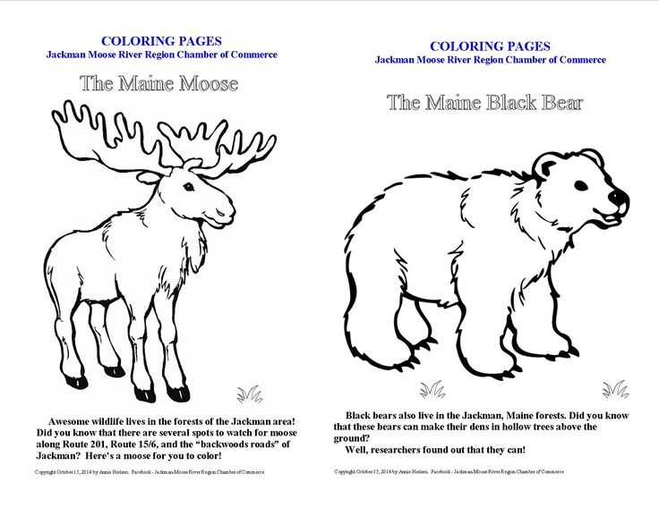 Coloring Pages For Kids The Maine Black Bear And Jackman Moose
