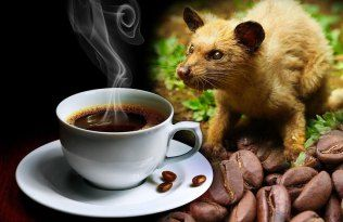 See This Bizarre Reason Why Kopi Luwak Is The Most Expensive Coffee...