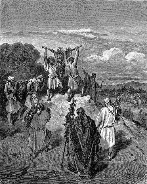 И пошли и пришли к Моисею и Аарону и ко всему обществу сынов Израилевых в пустыню Фаран, в Кадес, и принесли им и всему обществу ответ, и показали им плоды земли; и рассказывали ему и говорили: мы ходили в землю, в которую ты посылал нас; в ней подлинно течет молоко и мед, и вот плоды ее (Числа 13:27-28)