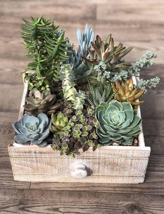 Arranjos bonitos e criativos de mini suculentas   – An Outdoor life
