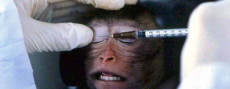 Detengan la experimentación con animales! http://www.sosvox.org/es/petition/detengan-la-experimentacion-con-animales.html