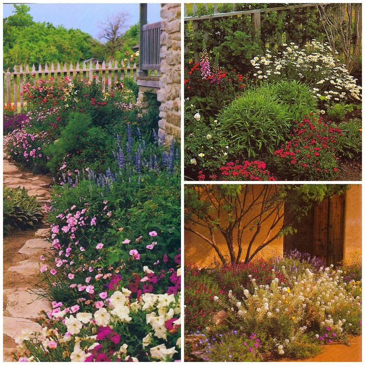 39 best Gardening (Zone 10a - So. Florida) images on Pinterest ...