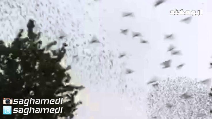 طيور شكلها جميل سبحان الله