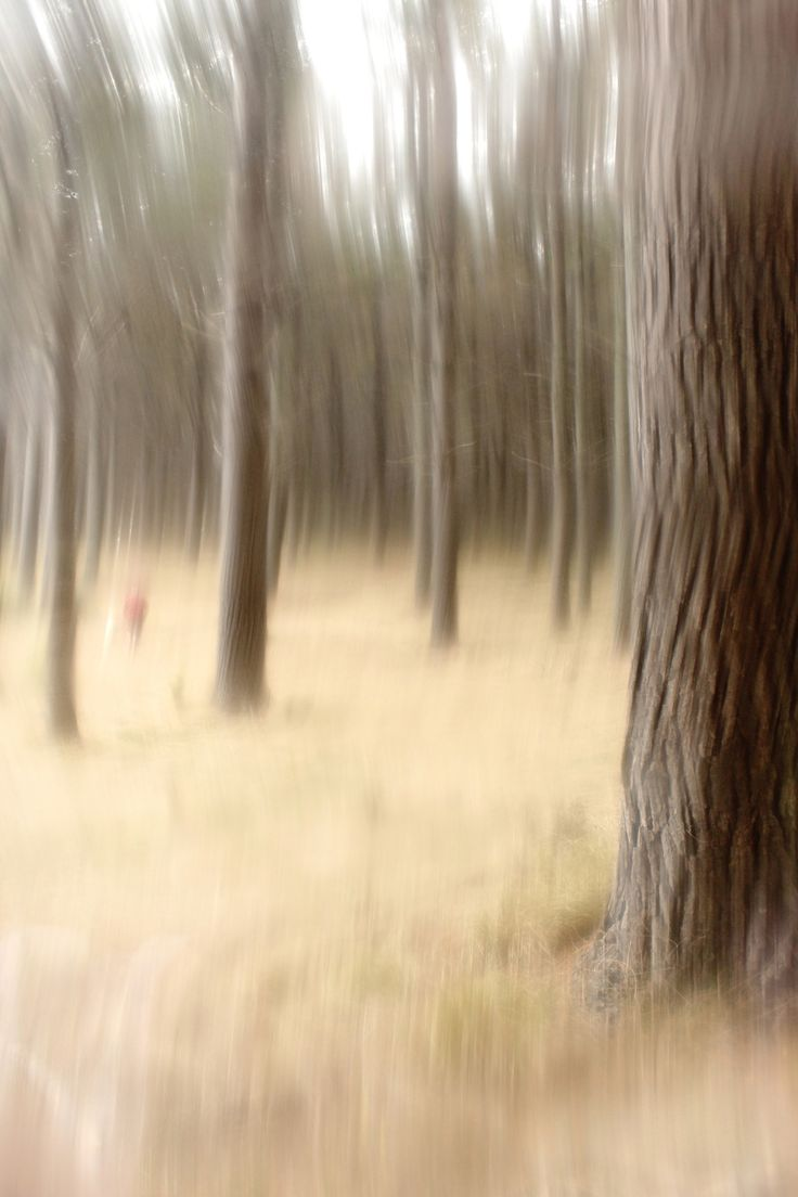 Forest Walk - Creative effect using Vaseline and glass
