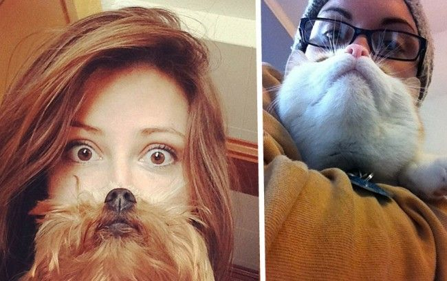 Dog Beards Are the Best Beards of All