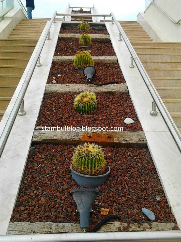 лестница кактусов
