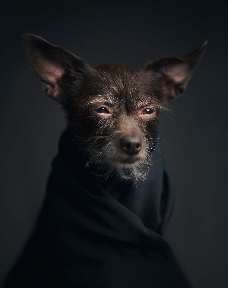 Expressive Animal Portraits Capture the Human Emotions in Our Pets -  #pets #photography #Vincentlagrange