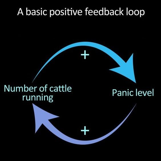 Positive Feedback (Systems Theory)