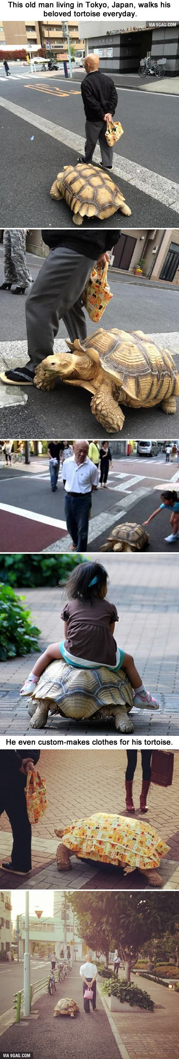 Best Beautiful Creatures And Animals Images On Pinterest - Man walks pet tortoise through tokyo