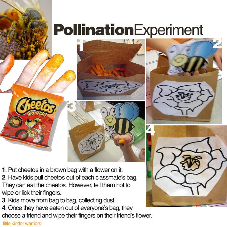 Cheetos Pollination experiment: Idea, Pollin Activities, Brown Bags, Paper Flowers, Cheetos Pollin, Pollin Experiment, Ag In The Classroom Teaching, Teaching Pollin, Classroom Hands Wash