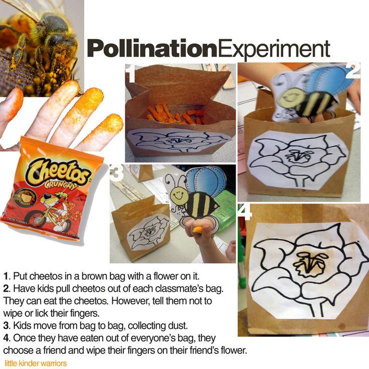 pollination experiment