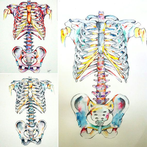 Know a medico or anatomy enthusiast with an amazing backbone, or a ribcage to marvel at? Show some respect to that strong spine with this A3 sized skeleton! From neck to sacrum, and out to the ribs, this skeleton is an upstanding pice of art.   Each hand-painted piece is an original! As such, some variation between paintings will occur, but the overall colour scheme will be exactly what youve ordered. Your personal colour combination is available by request, or pick from the samples above…