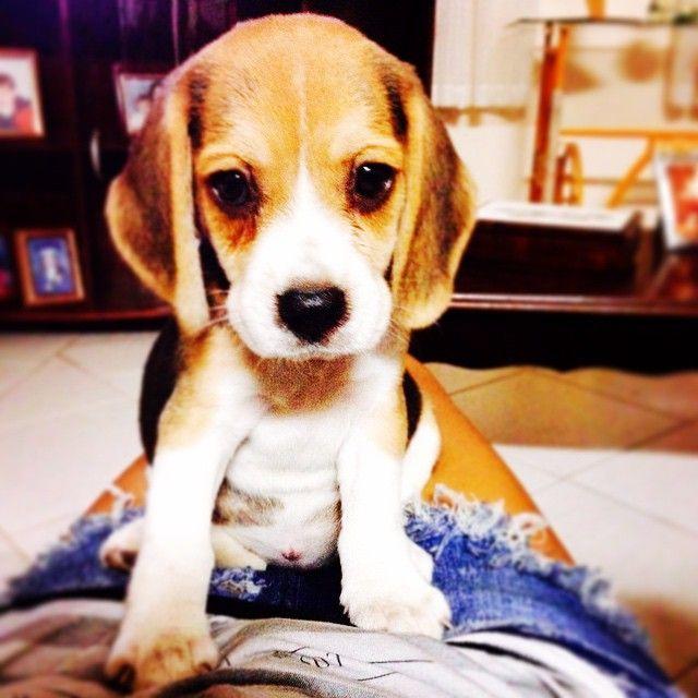 Beagle truths