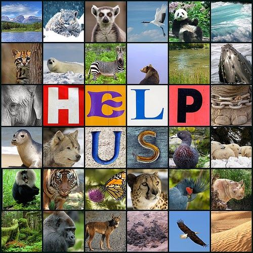 In Danger Animals: How to Assist Endangered Animals | Art Entertaiment and News