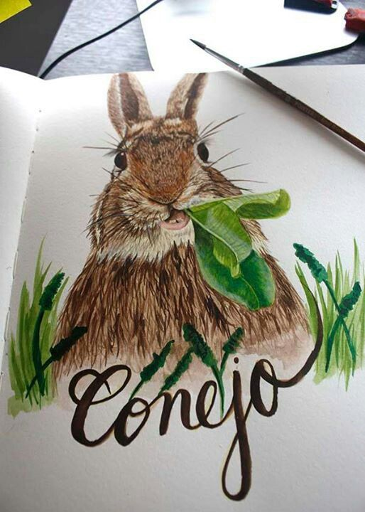 Finishing day 3, rabbit