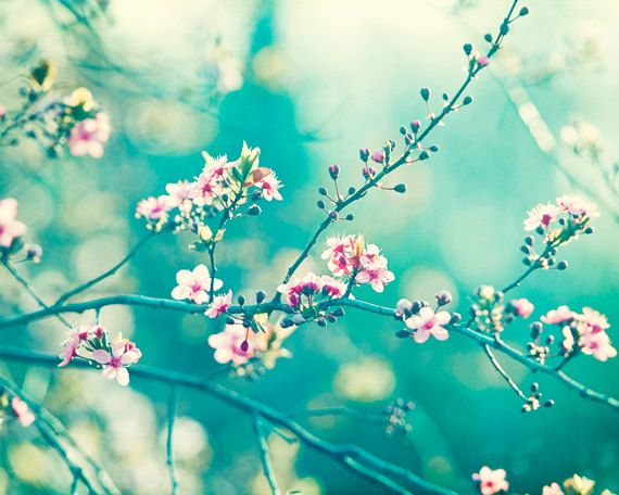 "Teal Photography - turquoise aqua blue wall art pink white flower nature print floral branches mint - 11x14 Photograph, ""A Piece of My Soul""..."