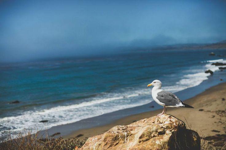 Снова захотелось немного солнечного тихоокеанского побережья в ленту в этот пасмурный зимний день P.S.: А чайка просто фотомодель!  Я, как истинный фотограф, провела подготовительную работу - попросила её посидеть на камне и не двигаться какое-то время. Модель оказалась не из пугливых, и фотосет удался  #mytrip #usa #LA #pacificocean #california #route1 #америка #моепутешествие #лосанджелес #калифорния #мечтысбываются #хочуеще