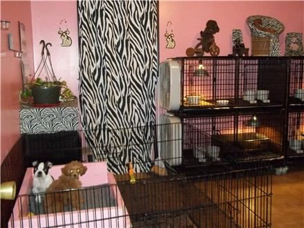 puppy room | Our Whelping room/Puppy room is a Spare