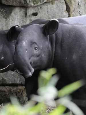 Begin hier je ontdekkingsreis door een van Europa's mooiste dierentuinen. Ontmoet bijzondere dieren in een natuurlijke omgeving. Dagje uit voor jong & oud!