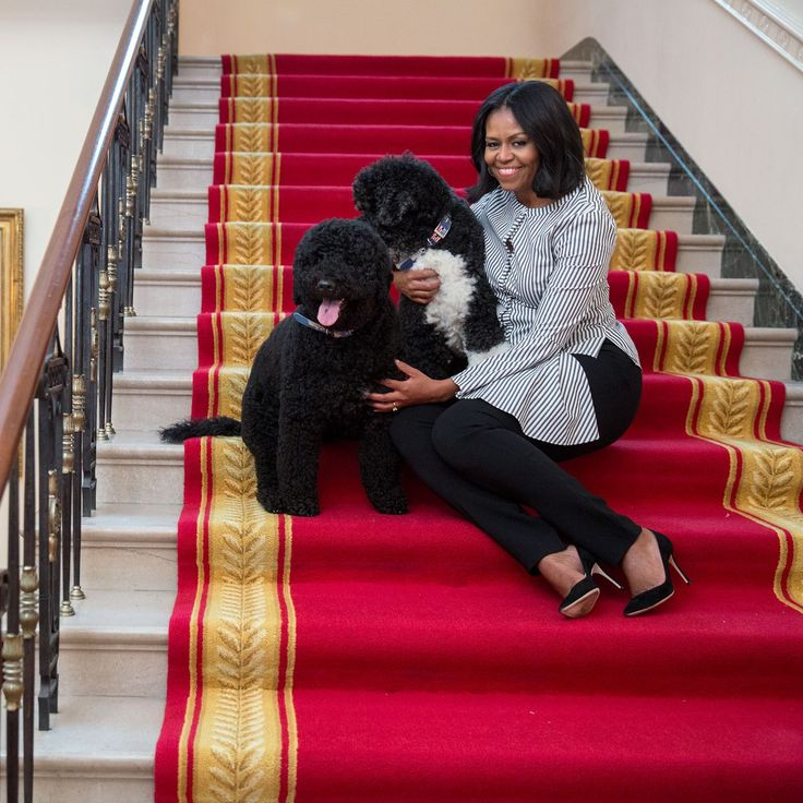 Adeus Sunny e Bo! http://palavrasdoabismo.blogspot.pt/2017/01/adeus-sunny-adeus-bo.html #animais #pets #dogs #presidentialpets #sunnyandbo