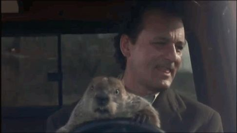 Pin for Later: 28 Times You Wished You Were as Cool as Bill Murray And lets Punxsutawney Phil drive. When was the last time you made a groundhog this happy?