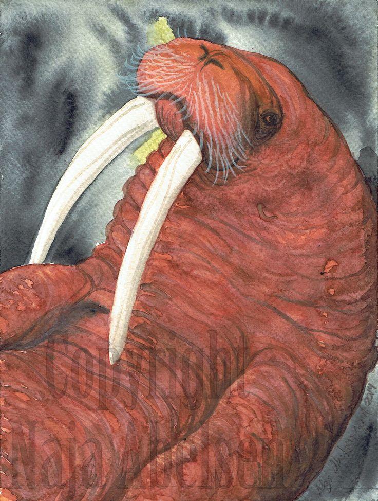 Rød Hvalros. (Red Walrus)  Watercolour 18 x 24 cm. april 2014. Pris 2.500 kr./ 335 Euro. www.najaabelsen.dk