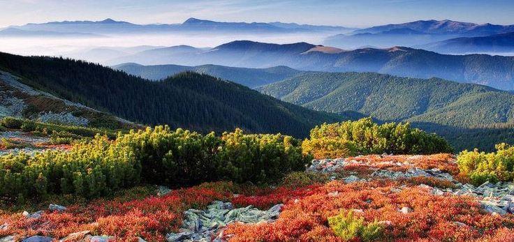 Вот и лето закончилось, но для любителей природного туризма это скорее плюс, чем минус. Осенью уже не жарко, но еще и не холодно, а в Карпатах склоны гор покрываются золотым убранством леса, целебный воздух становится еще чище, а минеральные источники – прозрачнее. В этих горах всё настоящее: и природа, и еда, и веселье, и люди, так что раздумывать вряд стоит – в Карпаты надо ехать обязательно. Мы ждем вас!! http://sokolyne-gnizdo.com.ua