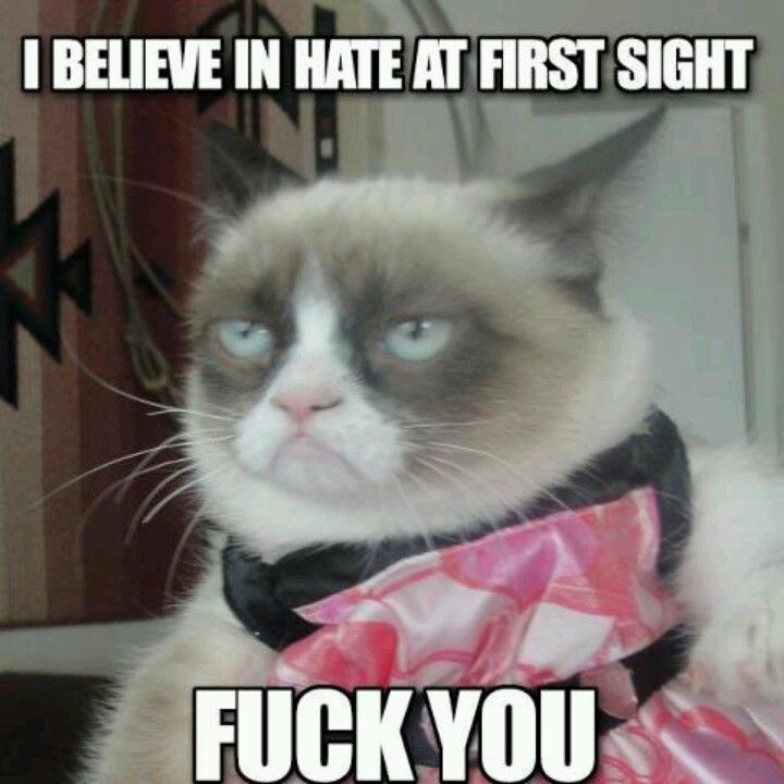 grumpy cat wedding invitations%0A Funny Pics with Captions Photos  grumpy cat memes  Cat memes  kitty cat  humor funny joke gato chat captions feline laugh photo