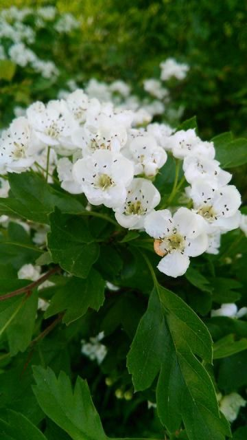 Stromy a keře | Bylinky pro radost