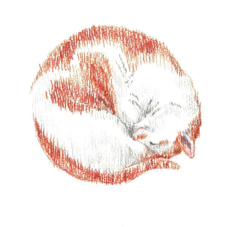 Red-headed cat, sleep, love, heart, сolour pencils, graphic, illustration, draw, рыжая кошка, кошка спит клубочком, любовь, сердце, графика, иллюстрация, цветные карандаши.