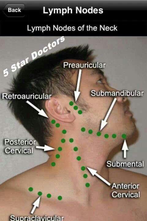 lymph nodes                                                                                                                                                                                 More