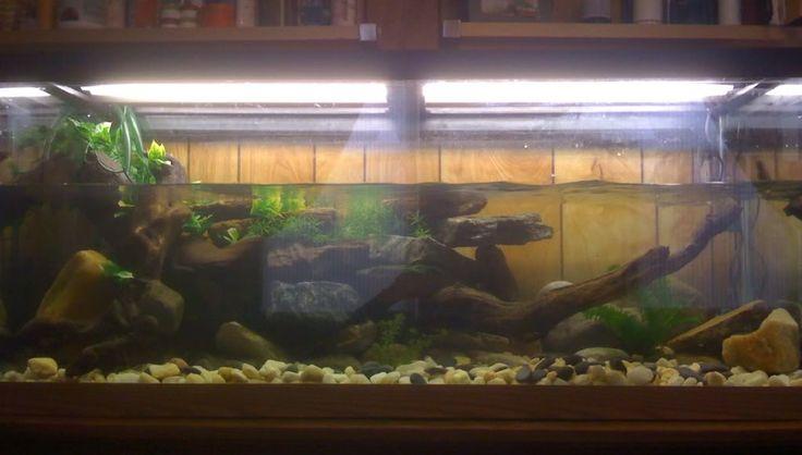 17 Best Images About Map Turtles On Pinterest Aquarium