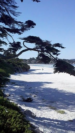 Carmel, California. Beautiful white sandy beach.  The road above it is one way and has great houses on this drive.