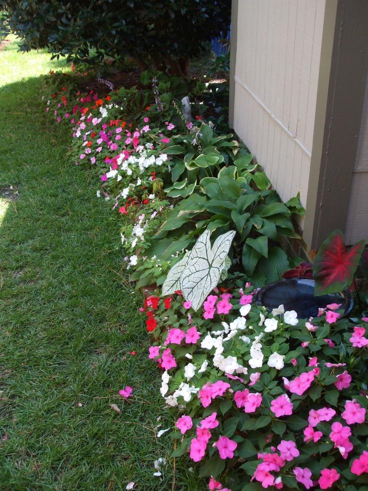 Caladiums And Hosta Landscaping