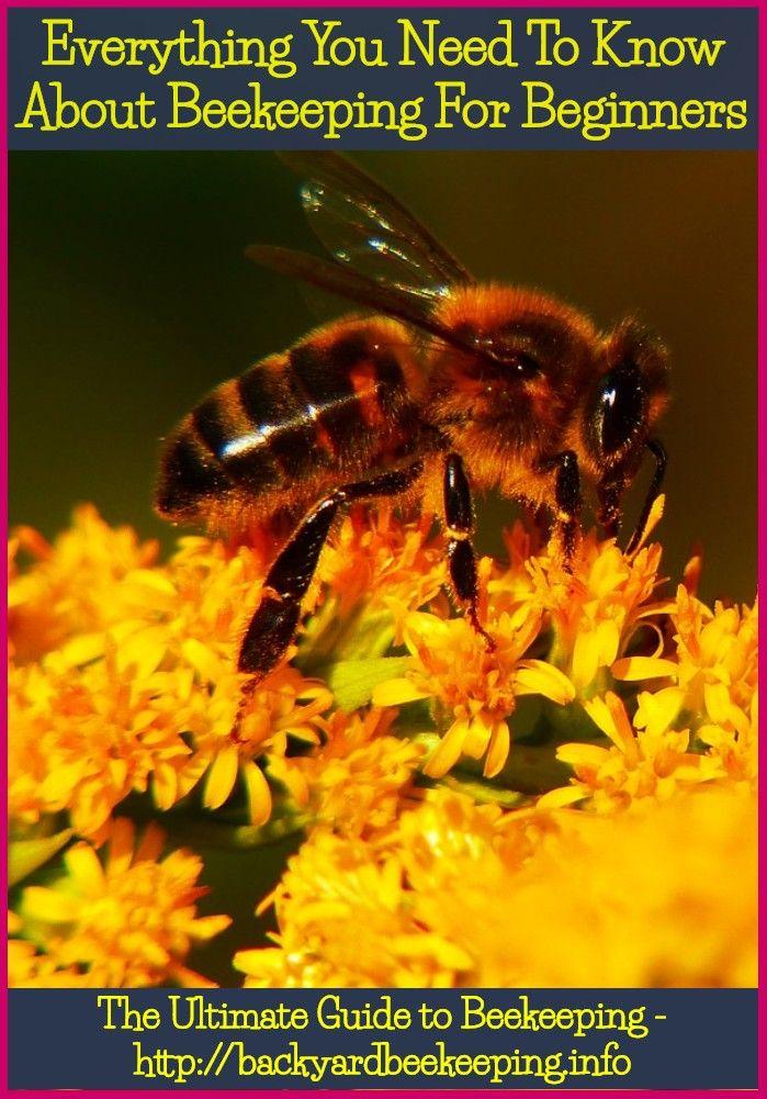 Keeping Bees Meaning In Tamil Bee Keeping Bee Backyard Bee It is grown from tubers like potatoes in the ground. keeping bees meaning in tamil bee