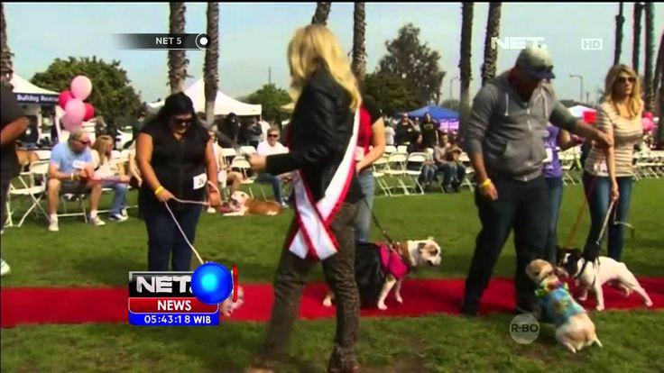 Gelaran Bulldog Beauty Contest ke 11 di Amerika Serikat