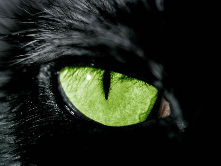 dans fond ecran yeux 770-oeil-du-chat-WallFizz