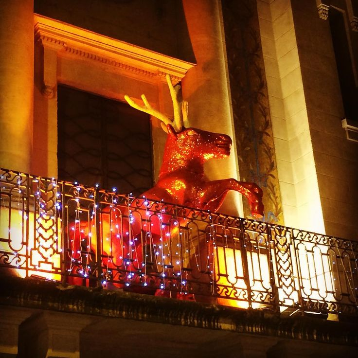 Rudolph landed in Bordeaux. #france #rudolphtherednosedreindeer #rudolph #christmas #bordeaux #nouvelleaquitaine #trianon