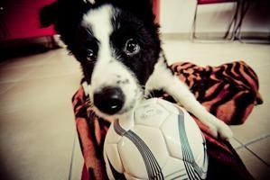 Anche ai cani piace giocare a pallone