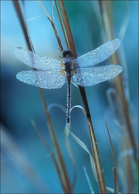 dragonfly ahha-moments